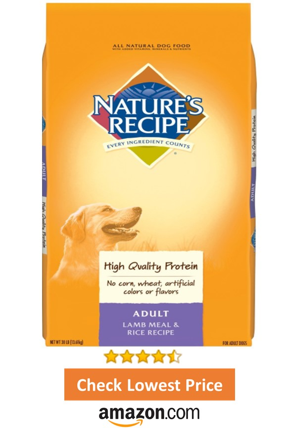 Best Recommended Wet Dog Food
